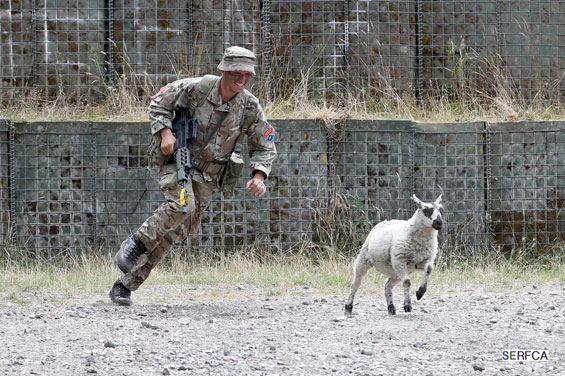 Berks-cadets-sheep3